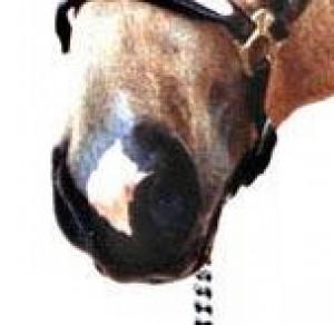 Výsledek obrázku pro šňupka odznak koně